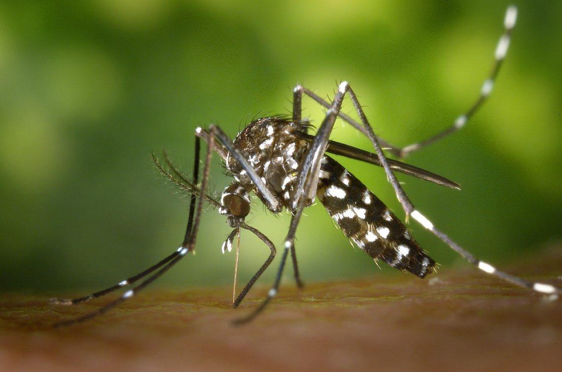 Piège anti-moustique